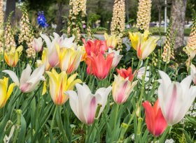 Malmesbury Abbey Gardens