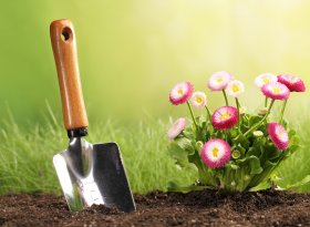 Find self-catering accommodation for flower & gardening