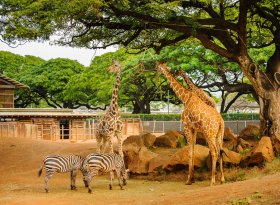 Find self-catering accommodation for zoo's