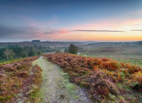 Find self-catering accommodation for New Forest