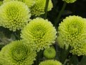 Find self-catering accommodation for National Chrysanthemum Show...
