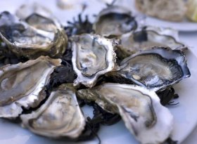 Falmouth Oyster Festival 2016
