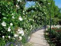 Find self-catering accommodation for RHS Hampton Court Palace Flower Show...