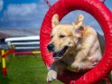 Find self-catering accommodation for Scottish Kennel Club Championship Show...