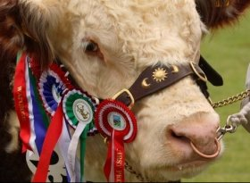 Find self-catering accommodation for Devon County Show