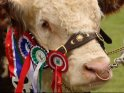 Find self-catering accommodation for Devon County Show...