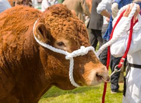Find self-catering accommodation for Staffordshire County Show