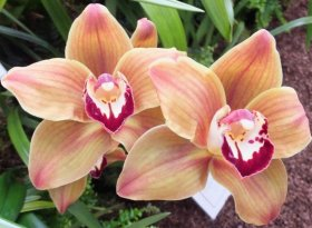 Find self-catering accommodation for RHS London Orchid Show