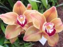 Find self-catering accommodation for RHS London Orchid Show...