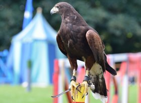 Find self-catering accommodation for Royal Welsh Show