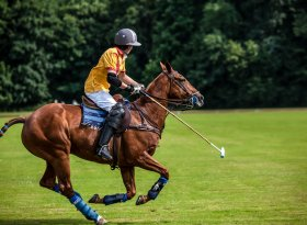 Find self-catering accommodation for Polo in the Park
