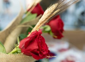 Find self-catering accommodation for Sant Jordi's Day
