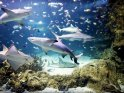 Find self-catering accommodation for Sea Life Sydney Aquarium...