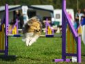 Find self-catering accommodation for Dog Lovers Show...