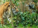 Find self-catering accommodation for ZSL London Zoo...