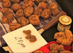 San Miniato Truffle Fair