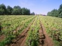 Self catering on a vineyard near Henley on Thames