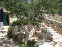 Olive Trees Rear Garden