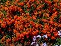 La Palma Bilder Garten Blütenmeer